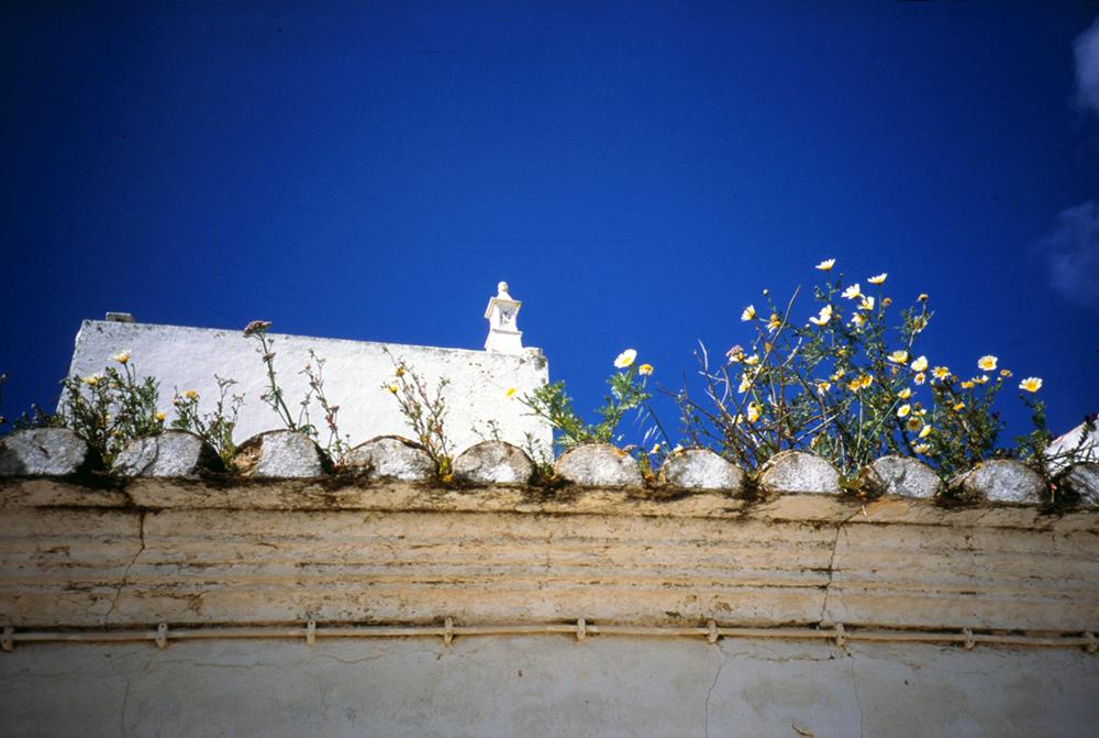 algarveflowers1