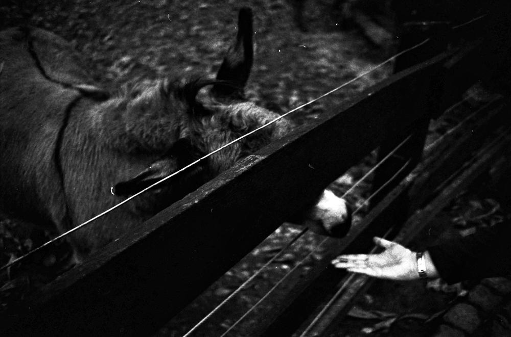 the donkeys at olderdissen