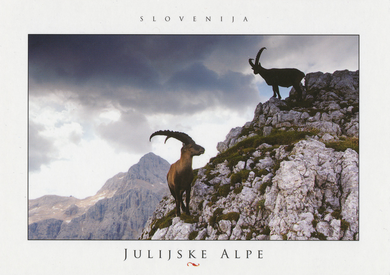 Goats in the Julian Alps