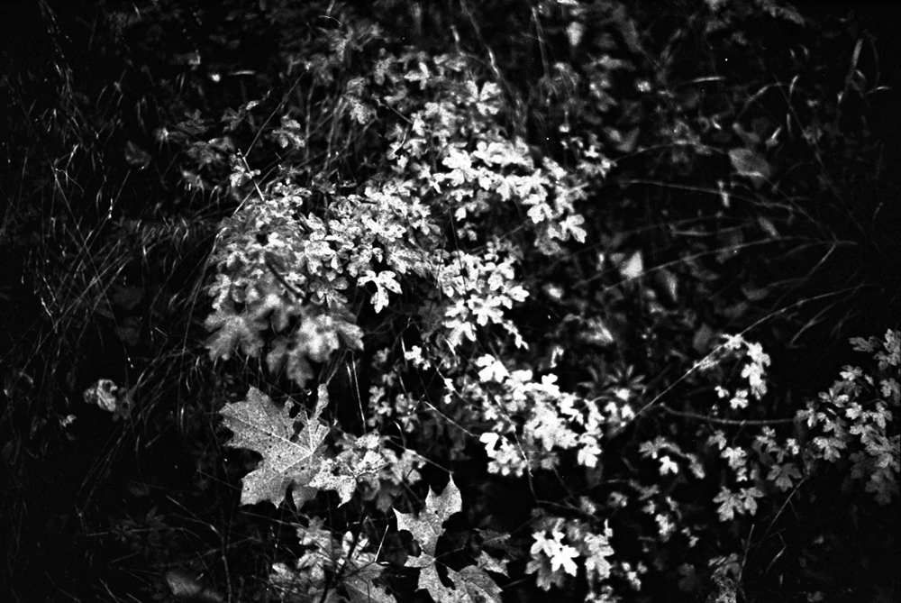 leaves_water