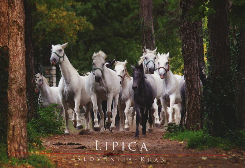 Lipica