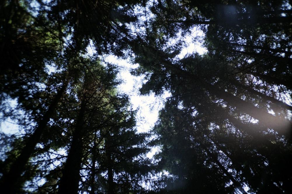 slovenia_trees