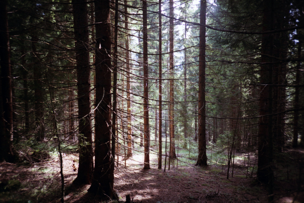 slovenia_trees2